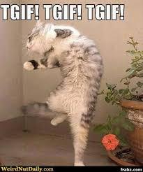 Happy Cat Meme - tgif happy cat meme generator captionator caption generator