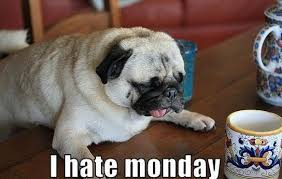I Hate Mondays Meme - pugs hate monday monday meme