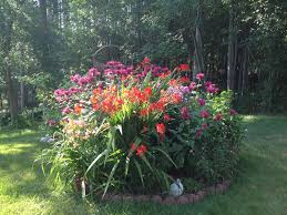 neoteric ideas hummingbird garden plants manificent design plants