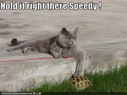Speedy Meme - hold it right there speedy cheezburger funny memes funny