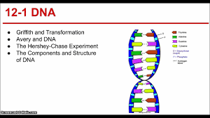 ch  dna and rna part   youtube with  from youtubecom