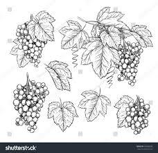 grape brunch leaves engraving style on stock vector 649000390