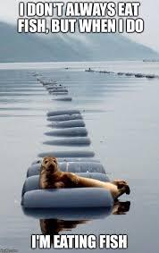 Awkward Seal Meme - most interesting awkward seal in the world imgflip