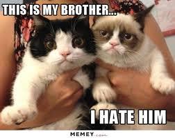 Grumy Cat Memes - grumpy cat memes funny grumpy cat pictures memey com