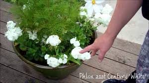 creating beautiful summer flower containers youtube