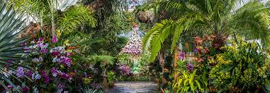 Botanical Garden Orchid Show The Orchid Show Thailand At The New York Botanical Garden The