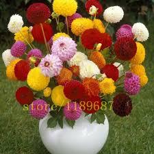 Cheap Flower Seeds - online buy wholesale cheap flower seeds from china cheap flower