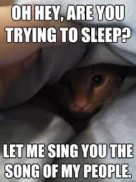 Grumpy Cat Sleep Meme - oh hey are you trying to sleep let me sing you the song of my