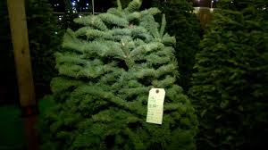 a christmas tree shortage is driving higher prices at lots this year
