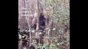 real skunk ape sighting stabilized enhanced u0026 w still shots