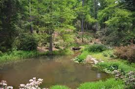 wonderful backyard bass pond part 3 backyard bass pond