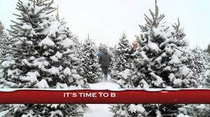 best places to get a christmas tree in columbus ohio axs