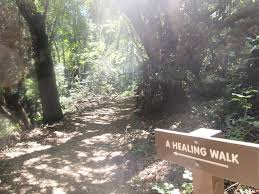 caltrain thanksgiving best post thanksgiving hikes in the bay area sfbaytripper