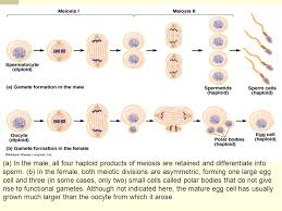 introduction to genetics mendel and meiosis ppt video online