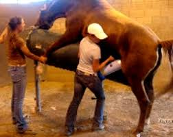 titan gel obat kuat 3 kuda shop vimaxsukabumi com pil kuda