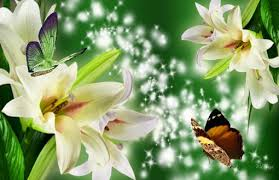lilies hd wallpapers search