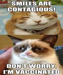 Grumpy Cat Monday Meme - 10 funny grumpy cat memes