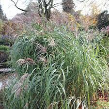 Pflanzen Fur Japanischen Garten Schöne Sichtschutzpflanzen Für Den Garten Native Plants