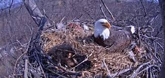why i spend hours an eagle s nest tue
