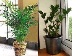 plants that grow in dark rooms 4 indoor plants for dark rooms lifeberrys com
