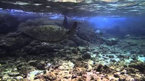 snorkeling richardson beach park hilo hawaii youtube