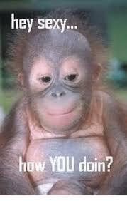 Sexy Monkey Meme - hey sexy how you doin meme on me me