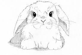lop eared bunny drawing by callan rogers grazado