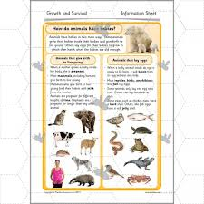 growth and survival animal life cycles ks1 complete series