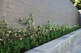 star jasmine on trellis andrew renn design beautiful gardens of melbourne australia