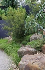 australian native garden garden ideas pinterest