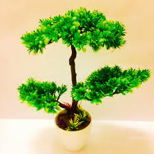 alluring 70 bonsai tree for office design inspiration of exellent
