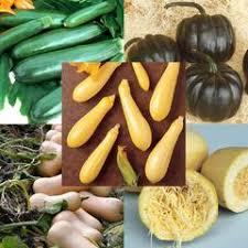 buy vegetable seeds trusted vegetable seed company u2013 harris seeds