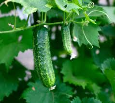 10 foods you can grow on your own time