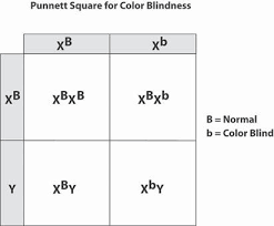How To Prevent Color Blindness Designer Babies Prevent You From Being Color Blind Musgrave9a