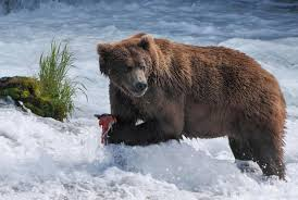 Alaska wild animals images When is wild alaska live on bbc one tonight who is presenting jpg
