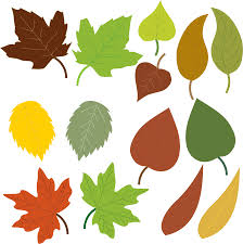 clipart variety of leaves