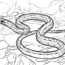 garter snake coloring page murderthestout