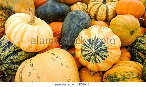edible gourds stock photos edible gourds stock images alamy