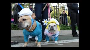 park city dog parade halloween the french bulldog smurfs at the new york city halloween howl dog