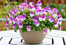 Flower Pots - pots for flowers garden ideas