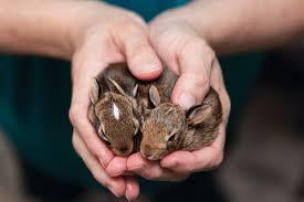 Rhode Island wild animals images Wildlife rehabilitators in rhode island rhode island monthly jpg