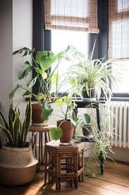 Indoor Plant Design by Top 25 Best Window Plants Ideas On Pinterest Apartment Plants