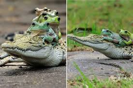 these pictures capture the moment a family of frogs