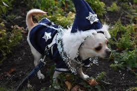 your ultimate dog halloween costume guide american kennel club