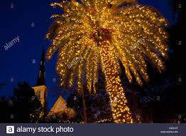 a palm tree decorated with christmas lights frames citadel square