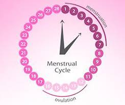 ovulation calculator understand what is ovulation fertility cycle