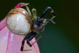 jumping spider philip u0027s blog