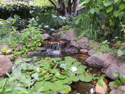Rock Water Features For The Garden by Mosquito Management For Ponds Fountains And Water Gardens