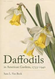 19 best flowers daffodils images on pinterest daffodils