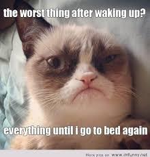 New Grumpy Cat Meme - new grumpy cat meme